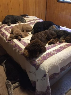 5 Dogs taking over my bed